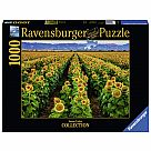 1000 Piece Puzzle, Fields of Gold