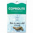 Coprolite (Fossilized Turtle Poop)